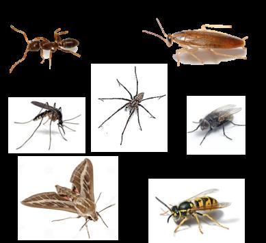 INSECT 1228 – Insecticide concentré pour insectes volants et rampants